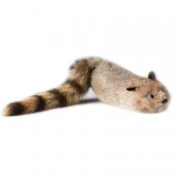Robbie Raccoon